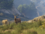Elk graze in the grass